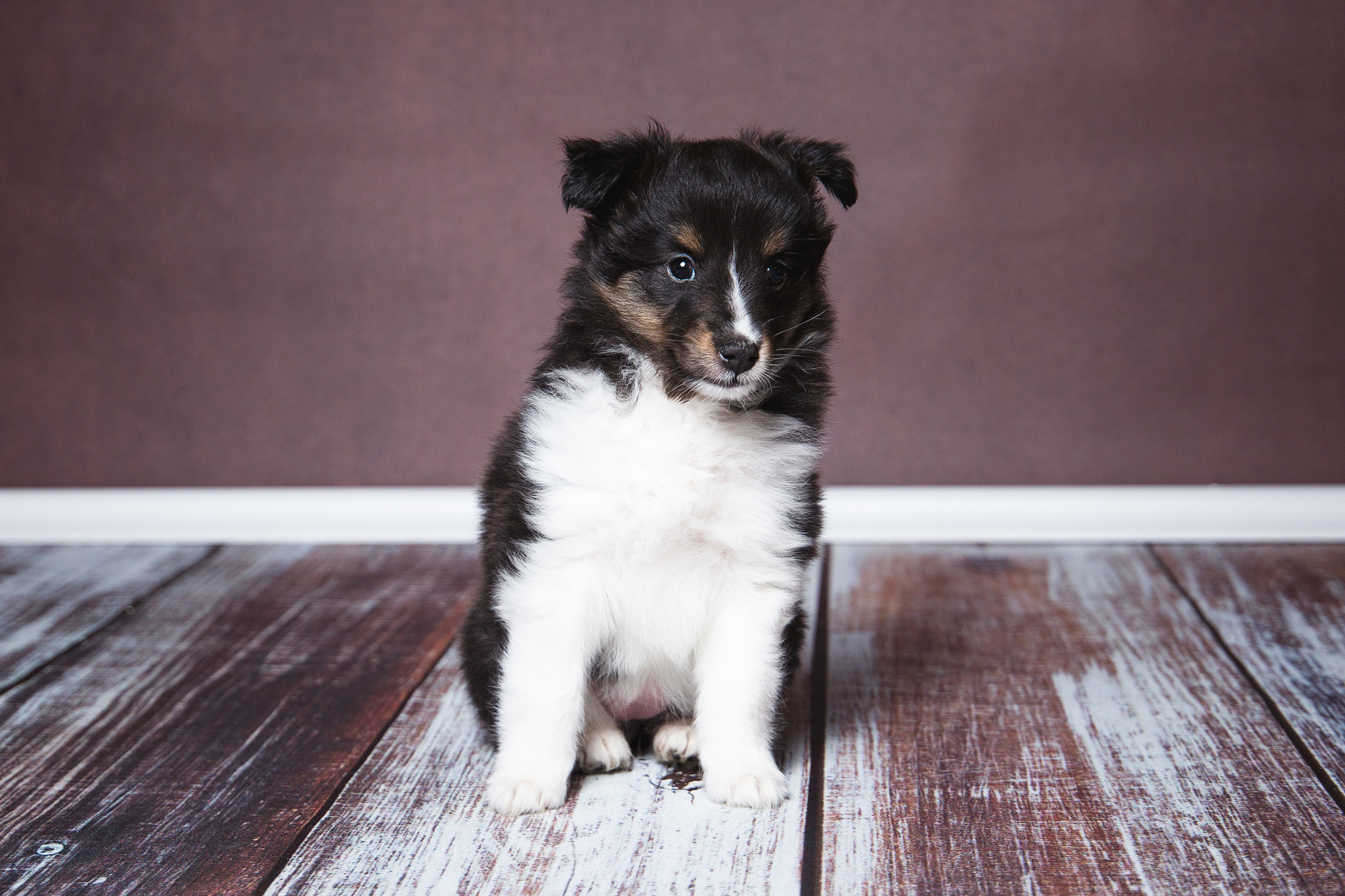 Ginny 6. Wochen alt