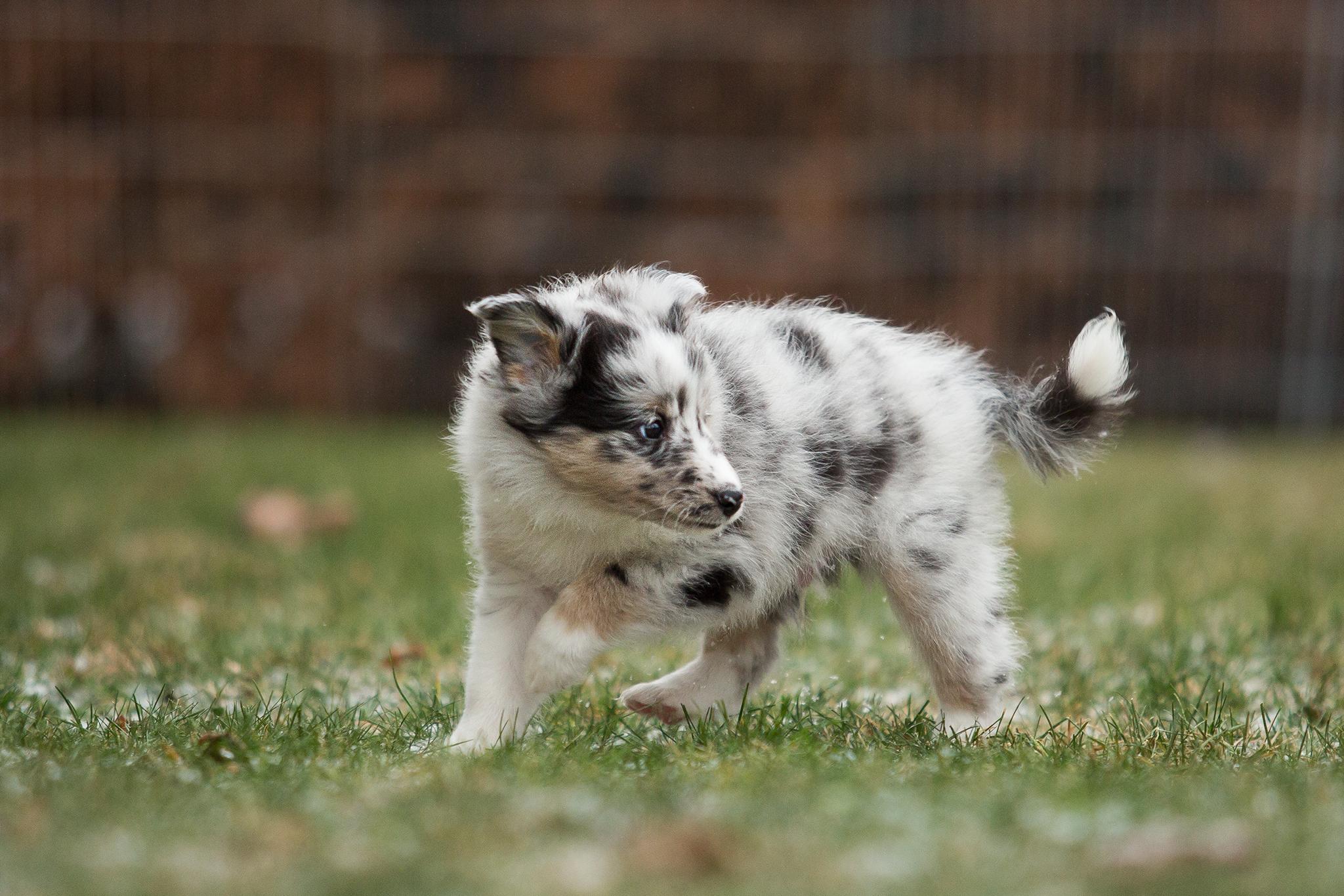 Garwin 6 Wochen alt