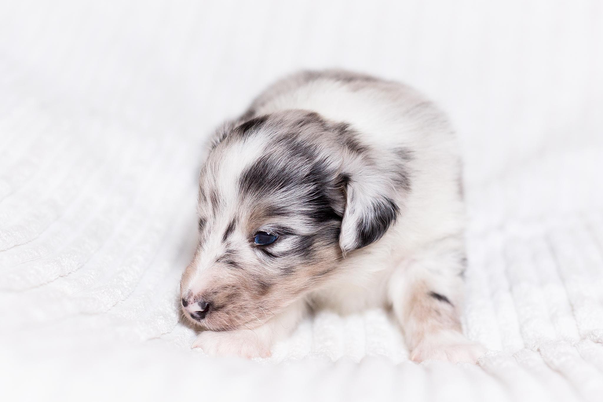 Garwin 3 Wochen alt