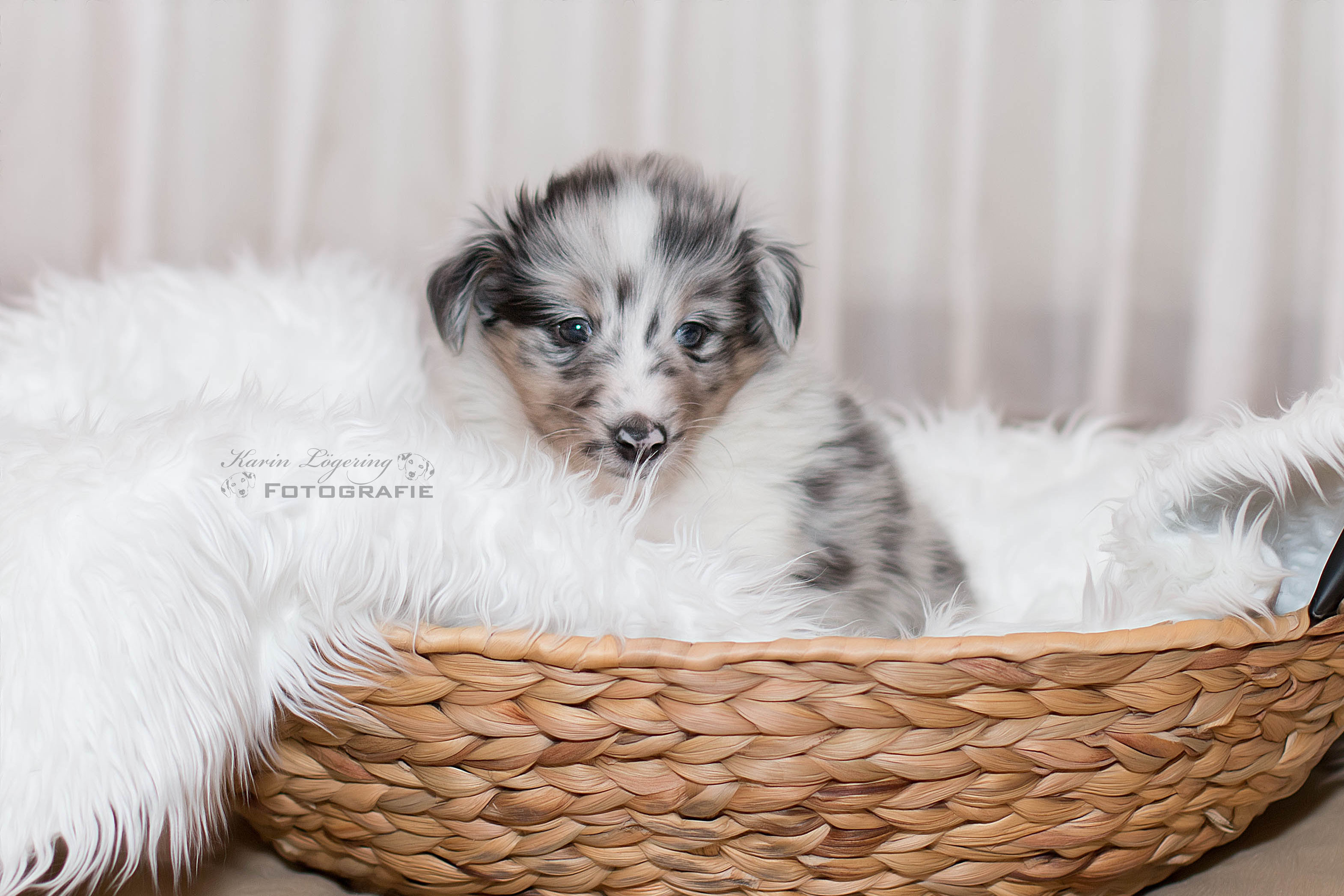 Garwin 5 Wochen alt