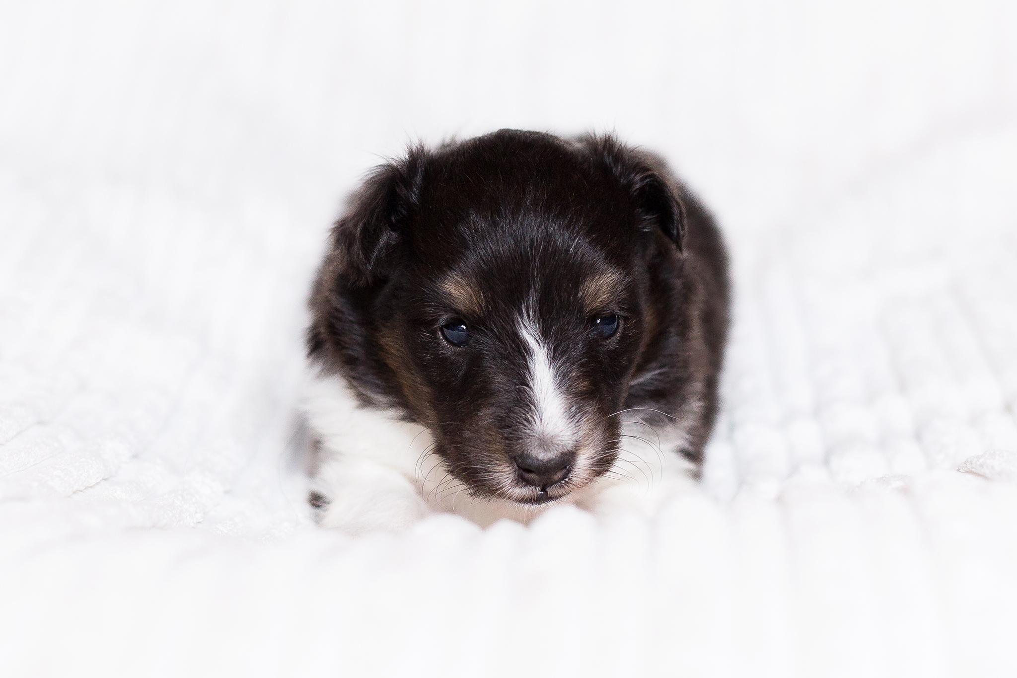 Ginny 3. Wochen alt