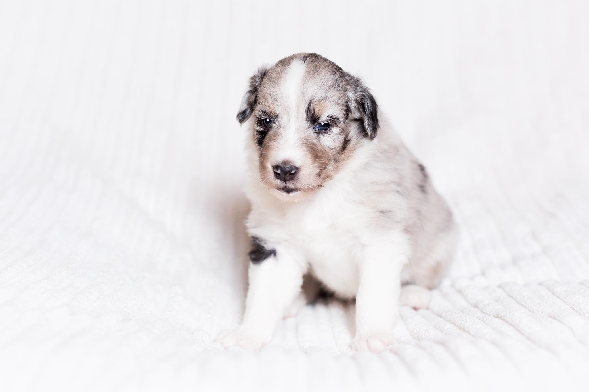 Gipsy 3 Wochen alt
