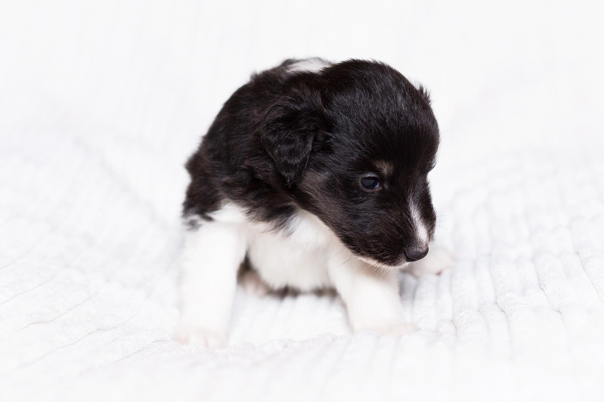 Grisu 3 Wochen alt