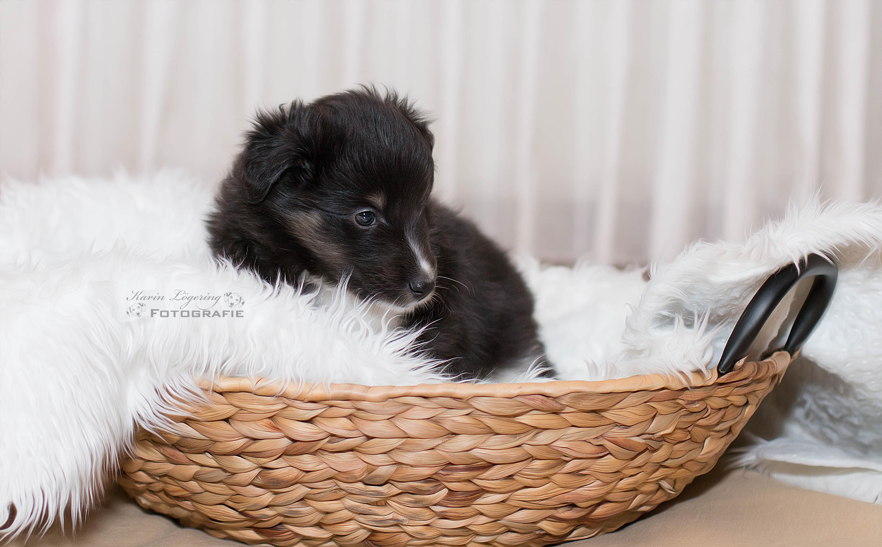 Grisu 5 Wochen alt