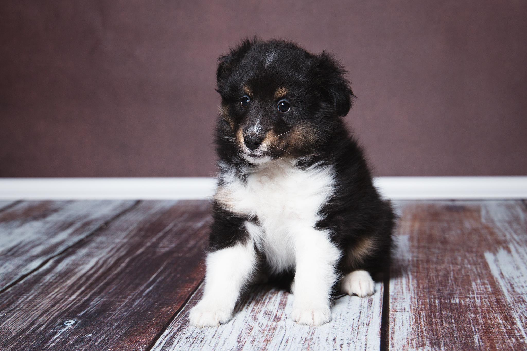 Gwenny 6 Wochen alt