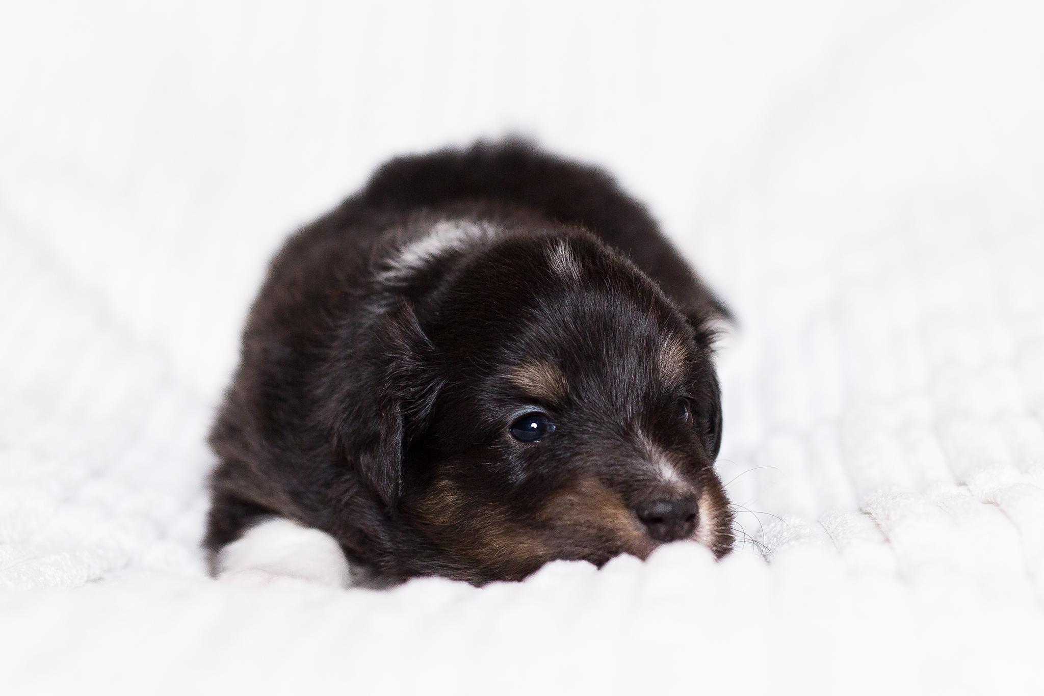 Gwenny 3 Wochen alt
