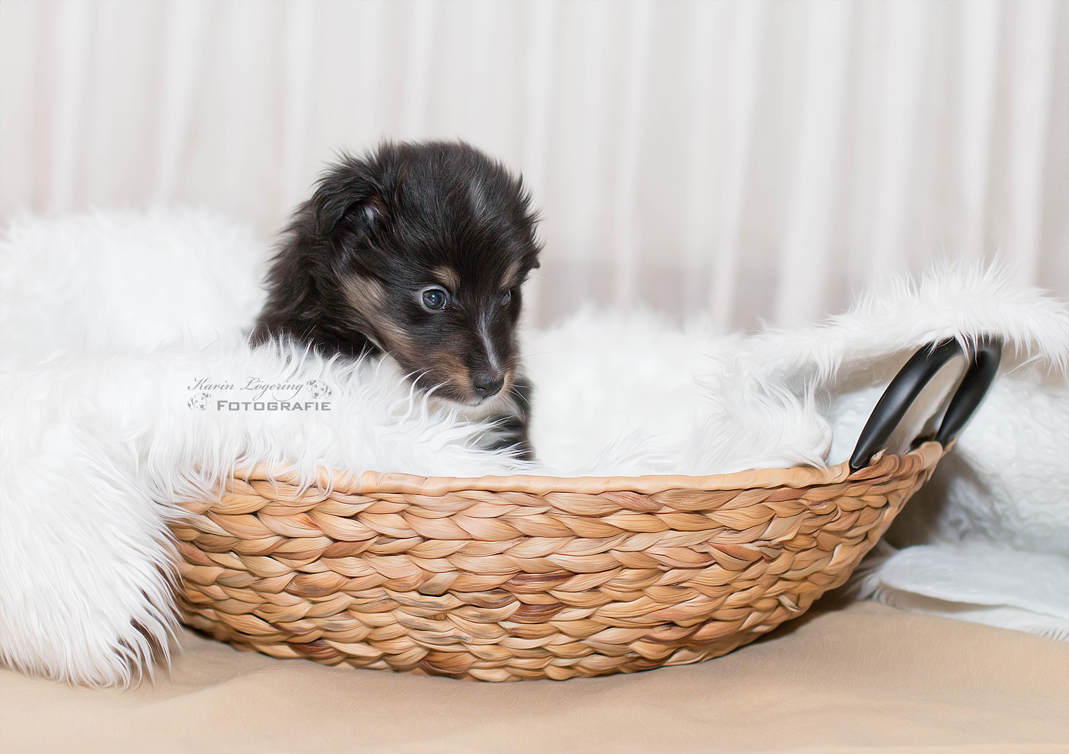 Gwenny 5 Wochen alt