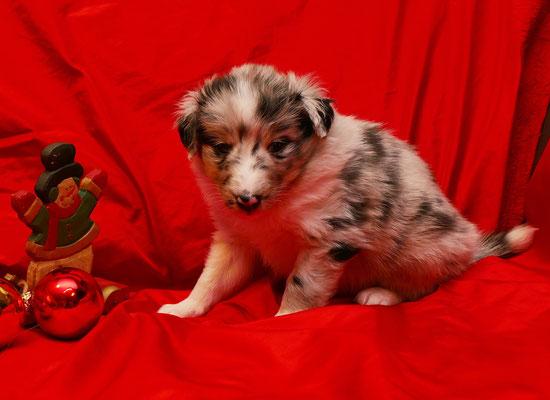 Garwin 4 Wochen alt