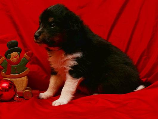 Gwenny 4 Wochen alt