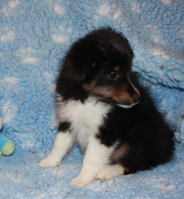 Gwenny 7 Wochen alt