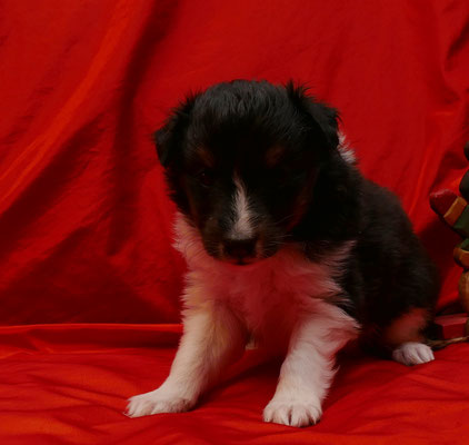 Ginny 4. Wochen alt